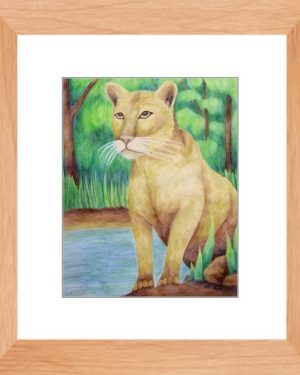 Framed Print - Cougar - Framed Print Of Watercolor Pencil Feline Land Mammal Fine Art