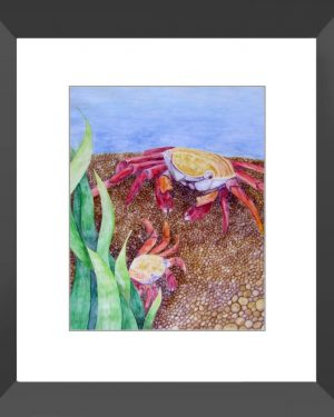 Framed Print - Crabs - Framed Print Of Watercolor Pencil Aquatic Fine Art