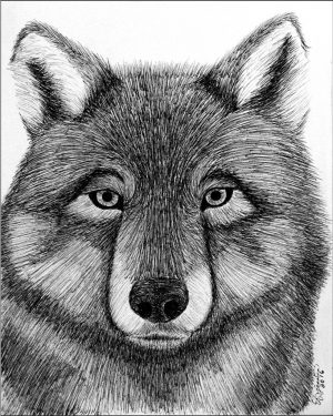 Giclee Print - Wolf - Giclee Print Of Black Ink Pen Drawing Fine Art