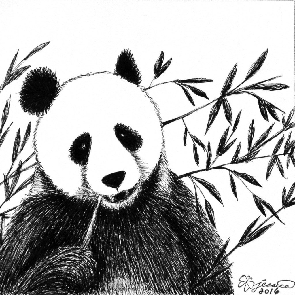 ProPrint - Panda - Professional Prints Of Marker Fine Art Drawing