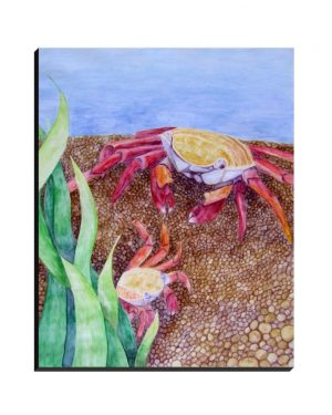 Wrapped Canvas - Crabs - Wrapped Canvas Of Watercolor Pencil Aquatic Fine Art