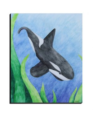 Wrapped Canvas - Orca - Wrapped Canvas Of Killer Whale Watercolor Pencil Aquatic Fine Art